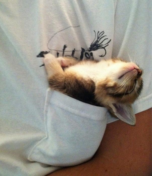 cute-sleeping-animals-67__605