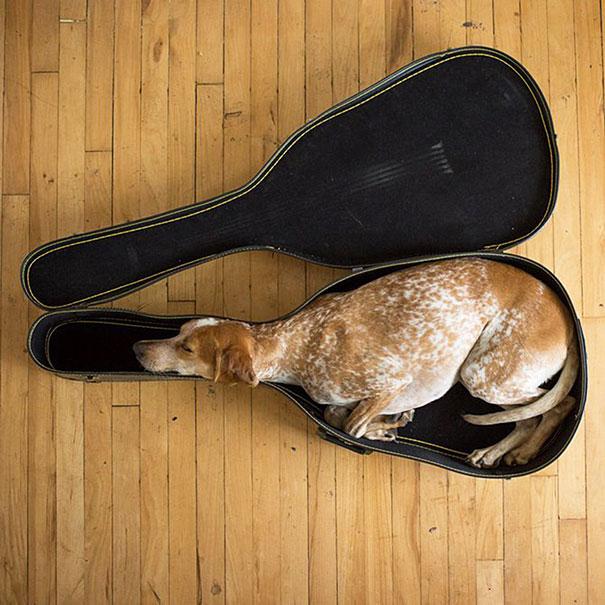 cute-sleeping-animals-99__605
