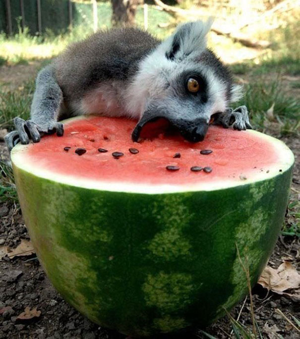 funny-animals-eating-111__605