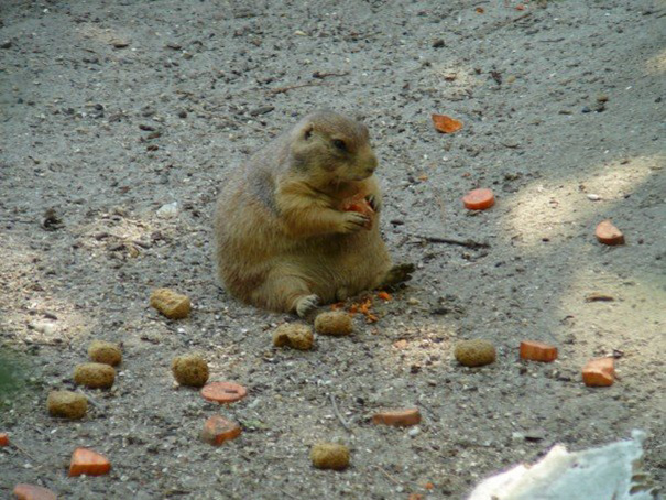 funny-animals-eating-122__605