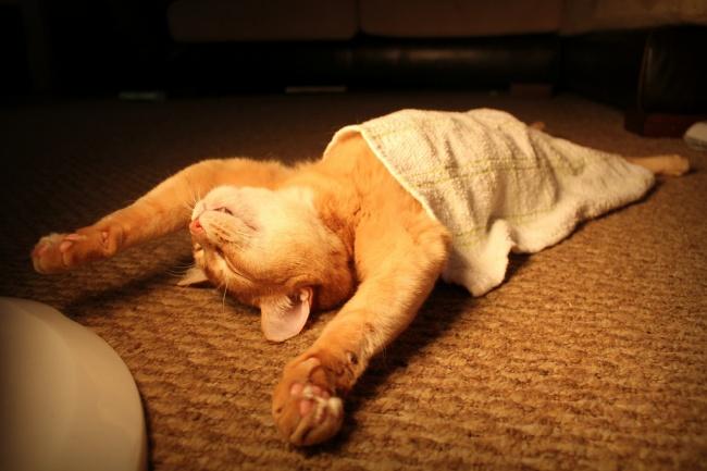 116705-650-1453291686-funny-sleeping-cats-1-1