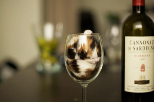 116755-650-1453291686-funny-liquid-cats-3