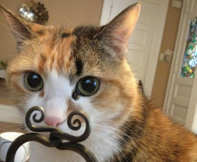 564955-650-1454668467-photo-gambar-ngakak-indo-funny-cat-falls-1024x843
