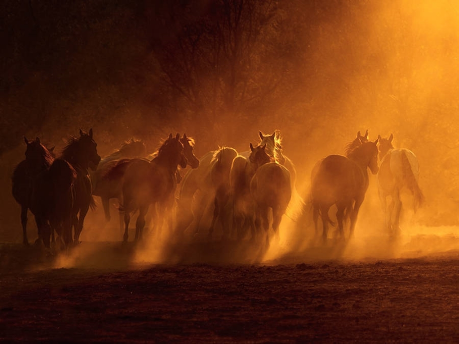 The-beauty-and-grace-of-horses-in-the-photos-by-Wojtek-Kwiatkowski-02