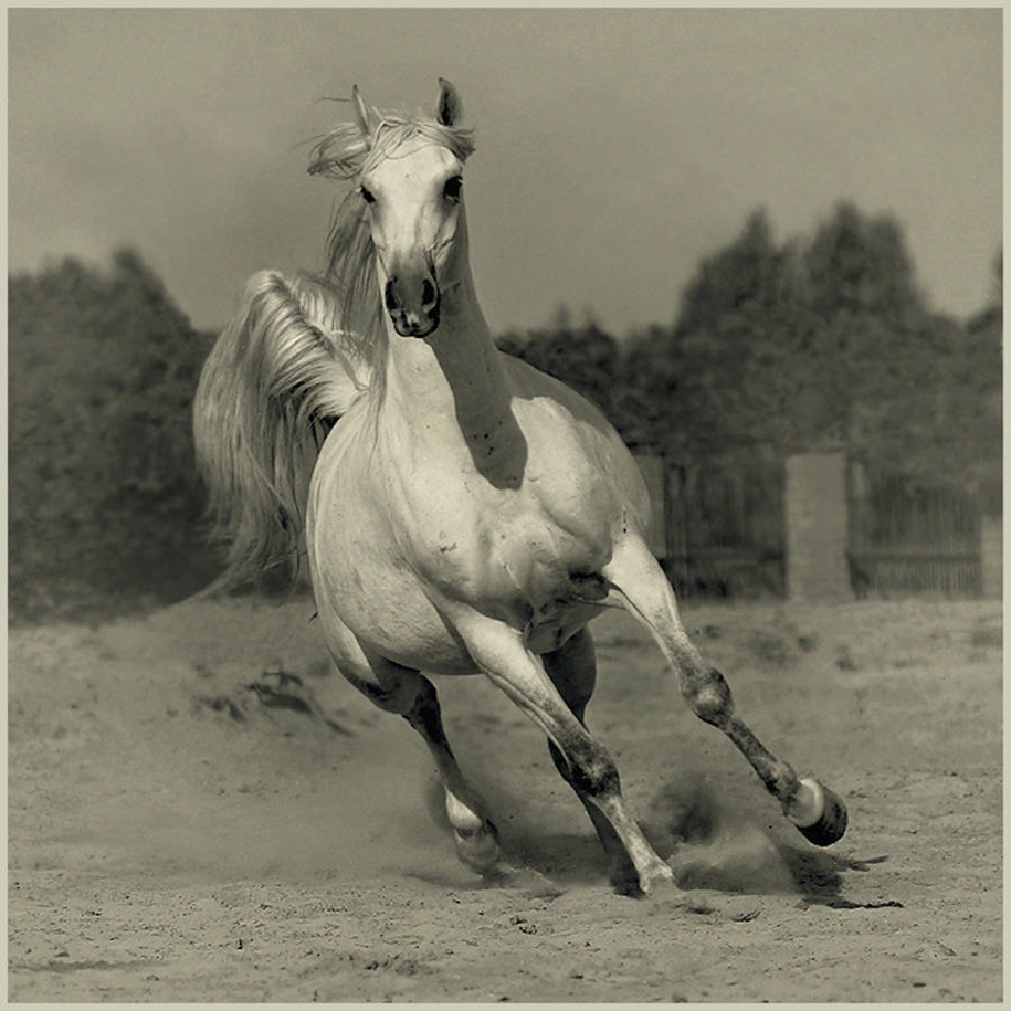 The-beauty-and-grace-of-horses-in-the-photos-by-Wojtek-Kwiatkowski-05