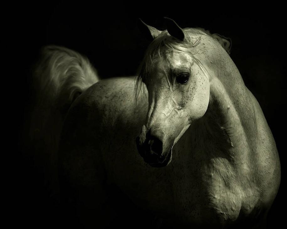 The-beauty-and-grace-of-horses-in-the-photos-by-Wojtek-Kwiatkowski-06