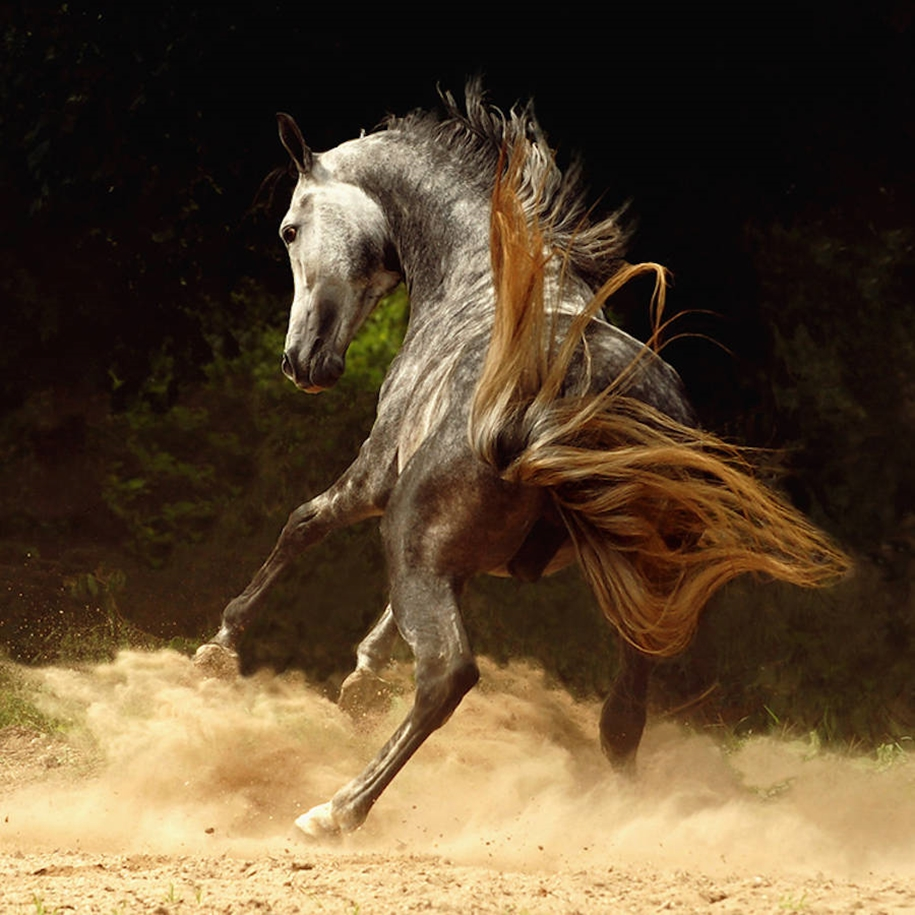 The-beauty-and-grace-of-horses-in-the-photos-by-Wojtek-Kwiatkowski-08