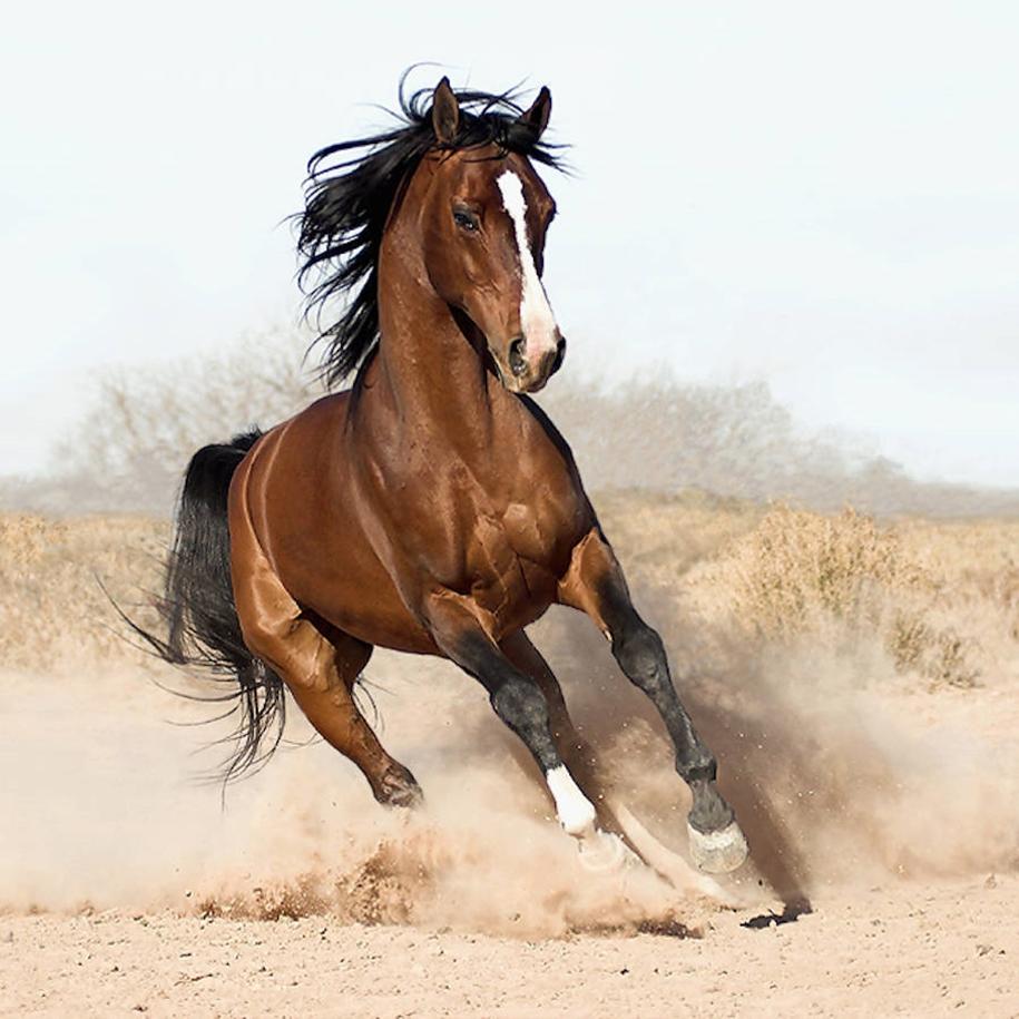 The-beauty-and-grace-of-horses-in-the-photos-by-Wojtek-Kwiatkowski-14