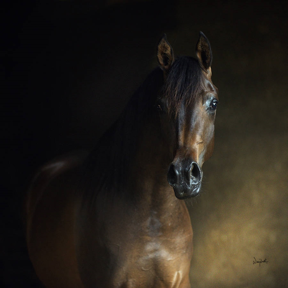 The-beauty-and-grace-of-horses-in-the-photos-by-Wojtek-Kwiatkowski-15