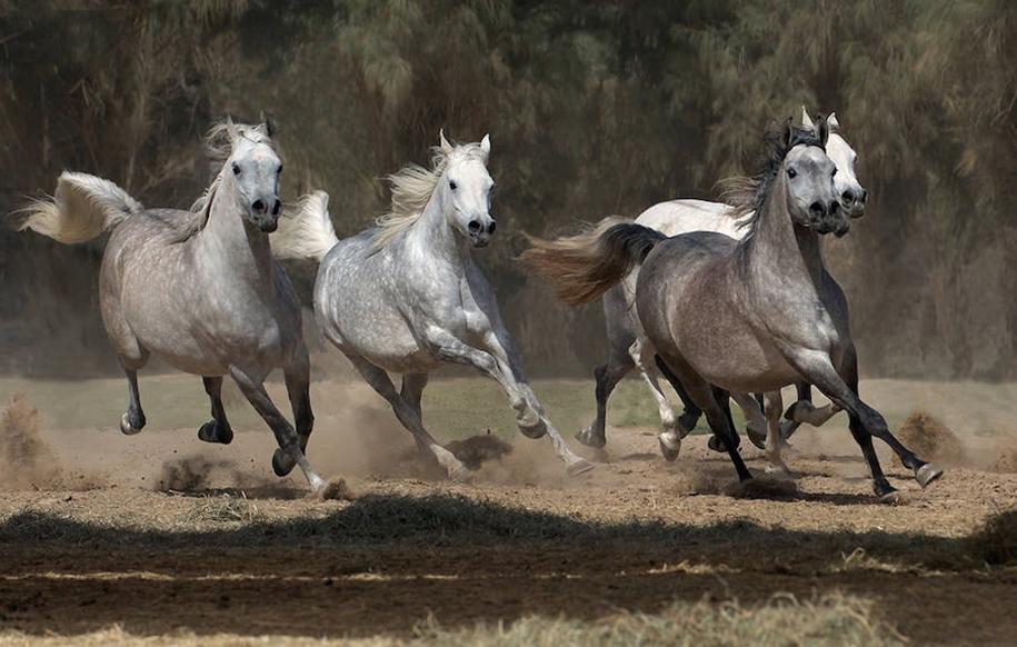 The-beauty-and-grace-of-horses-in-the-photos-by-Wojtek-Kwiatkowski-16