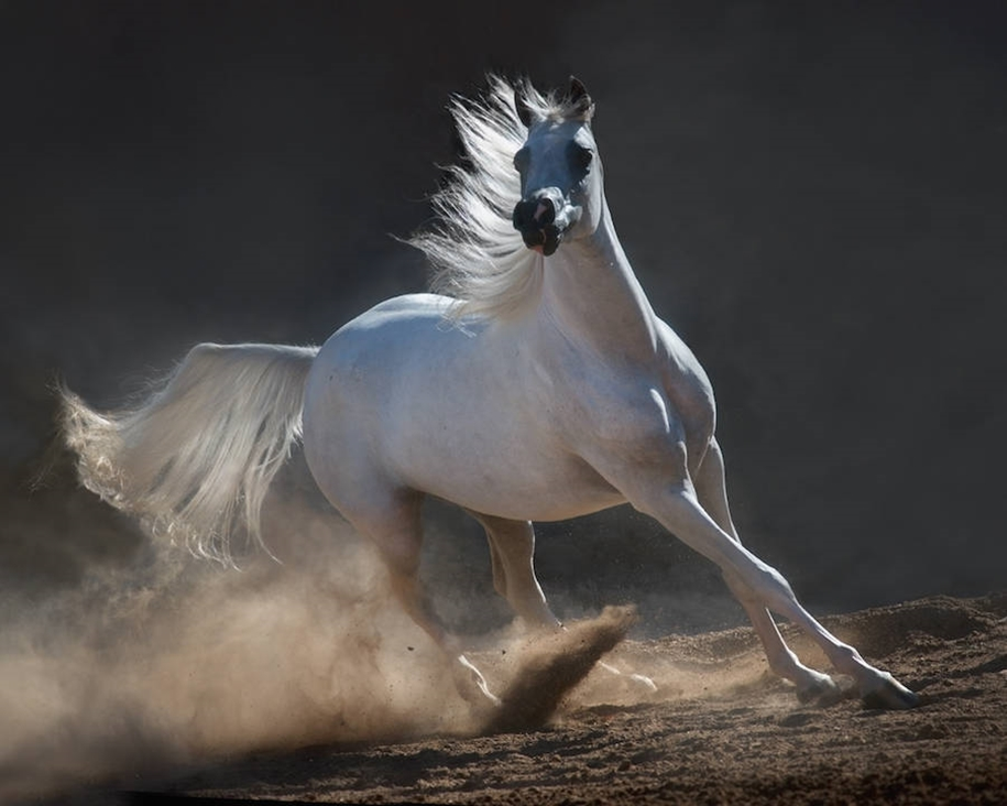 The-beauty-and-grace-of-horses-in-the-photos-by-Wojtek-Kwiatkowski-17