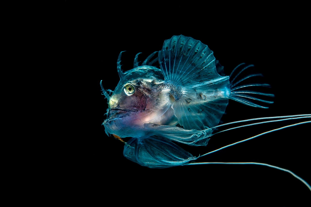 UK-Underwater-Photographer-of-the-Year-2016-Winners-18