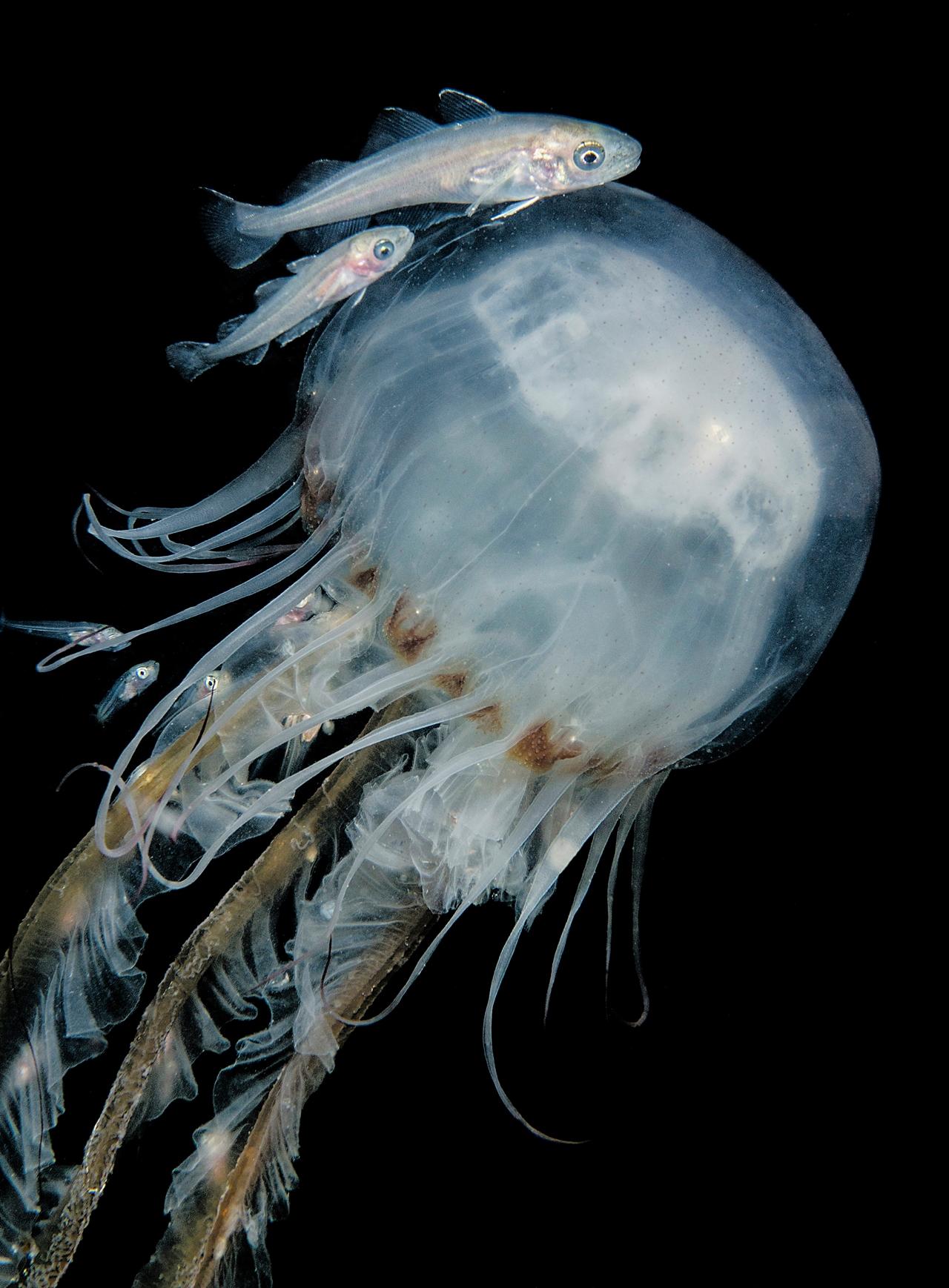 UK-Underwater-Photographer-of-the-Year-2016-Winners-19
