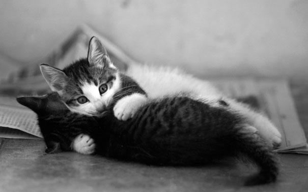 cat-couples-valentines-day-20__605