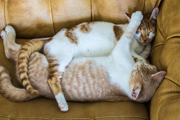 cat-couples-valentines-day-26__605