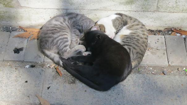 cat-love-5__605