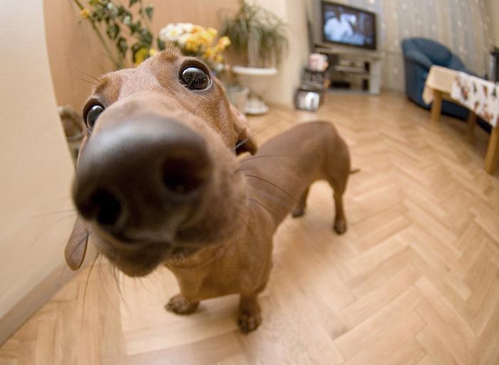 funny-dog-nose-closeups-18__700