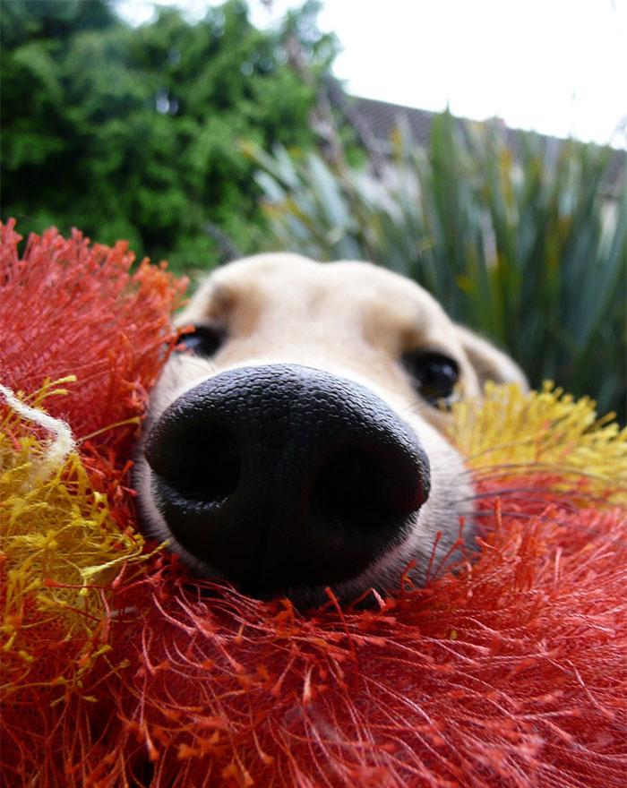 funny-dog-nose-closeups-33__700