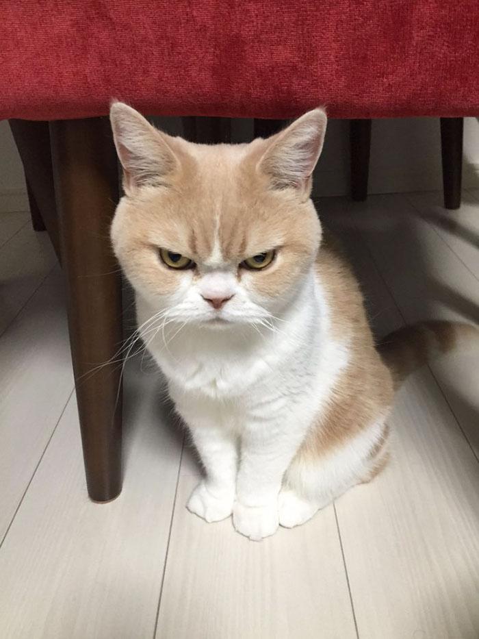 japanese-grumpy-cat-angry-koyuki-moflicious-22