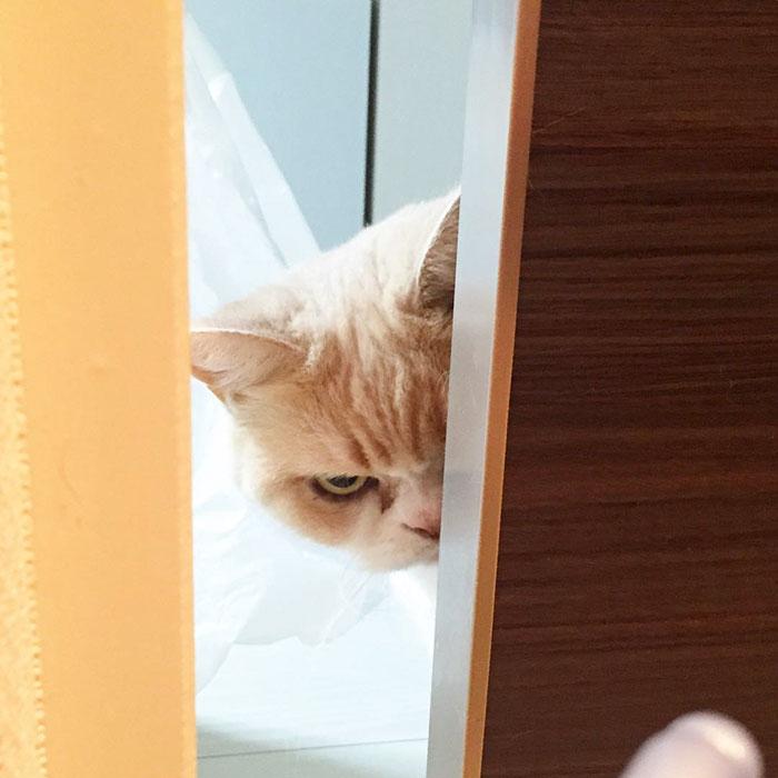 japanese-grumpy-cat-angry-koyuki-moflicious-3