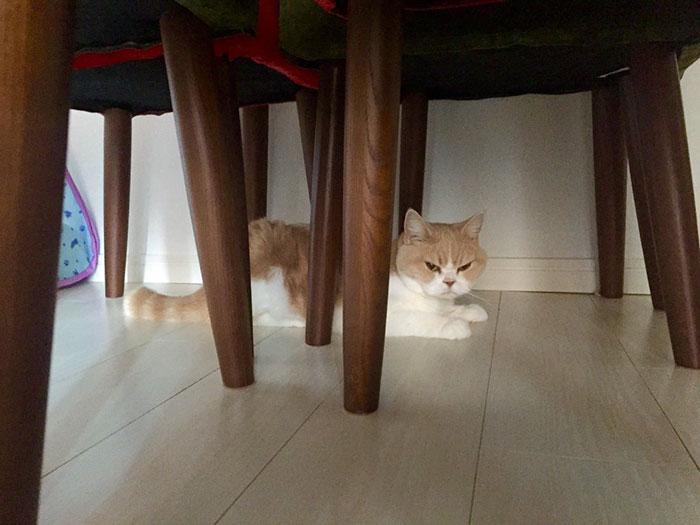 japanese-grumpy-cat-angry-koyuki-moflicious-38