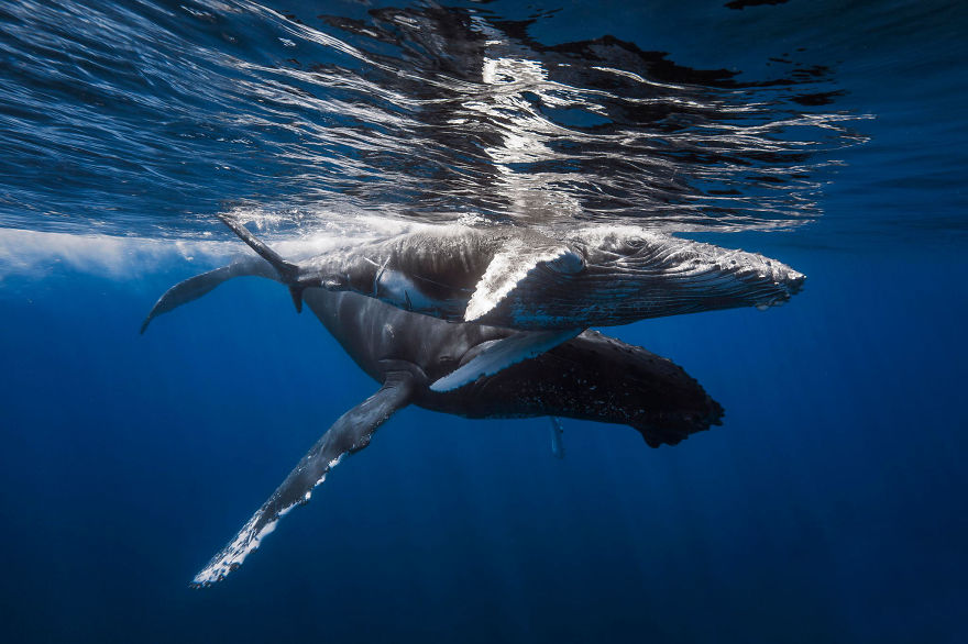 world-whale-day-photos-192__880