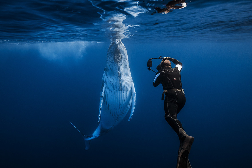 world-whale-day-photos-22__880