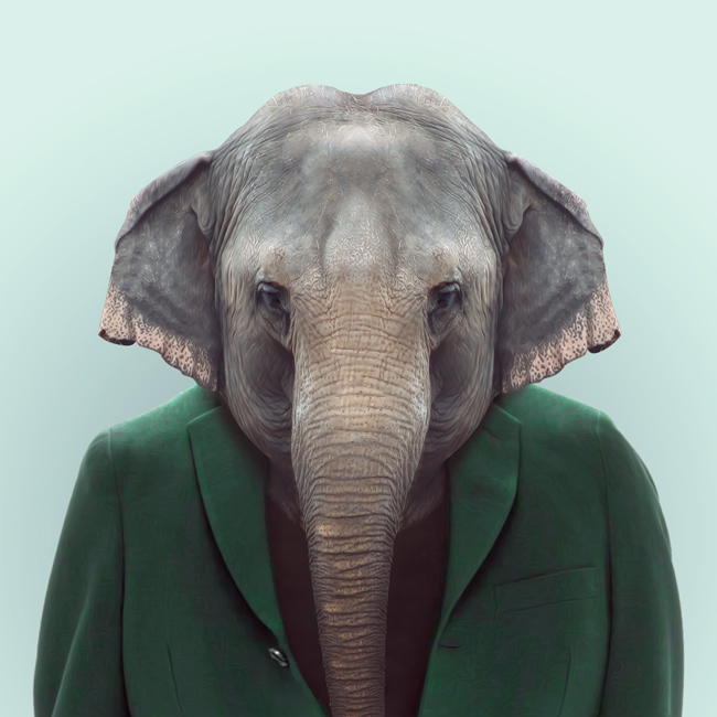 6-elephant-portrait-photography
