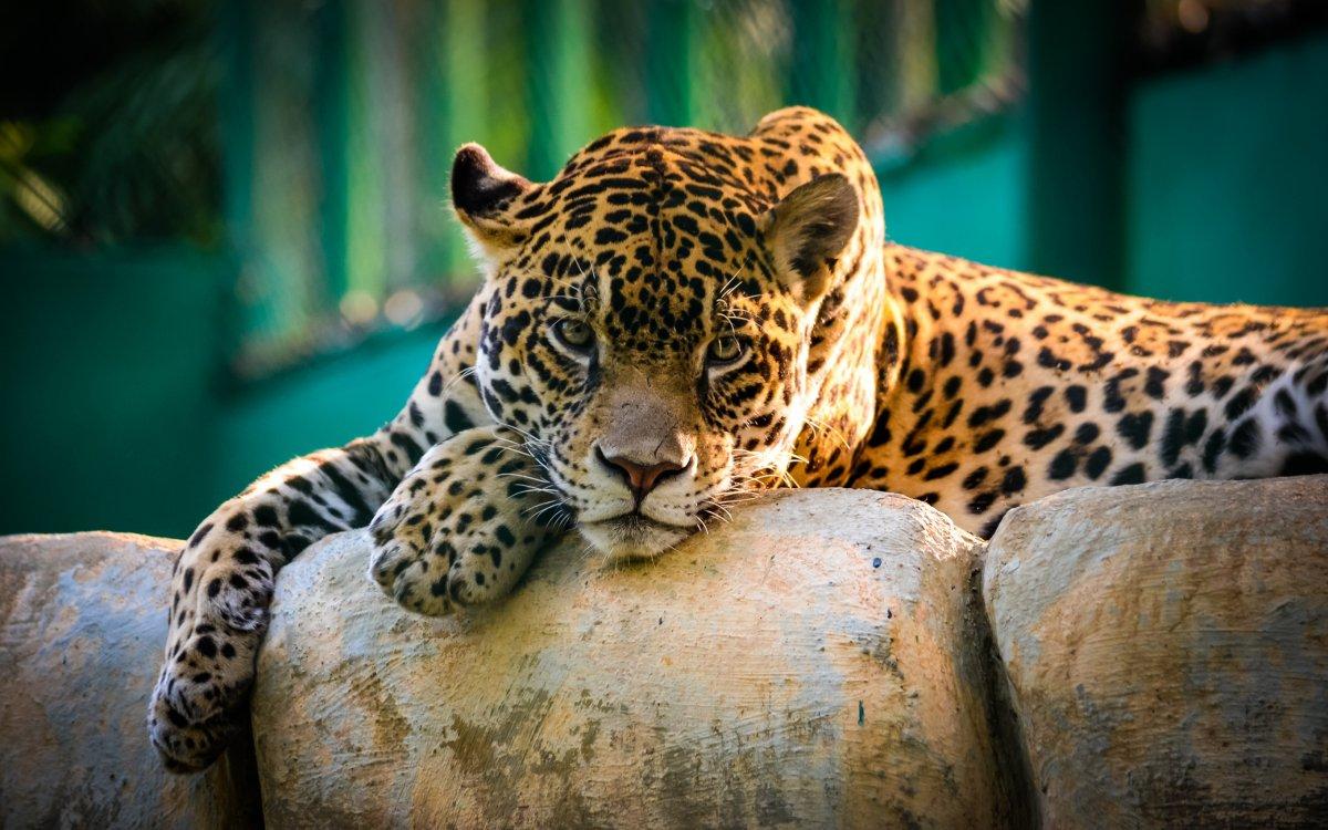 Cute-photos-of-wild-cats-01