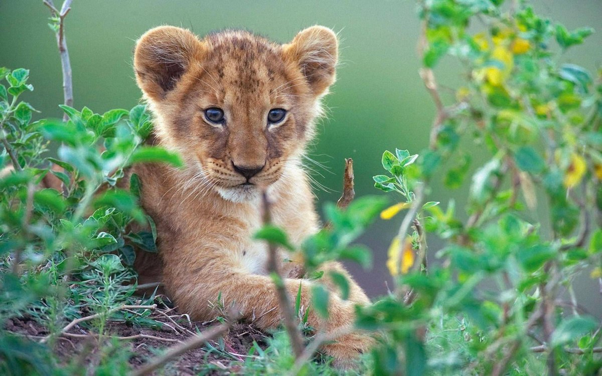 Cute-photos-of-wild-cats-05