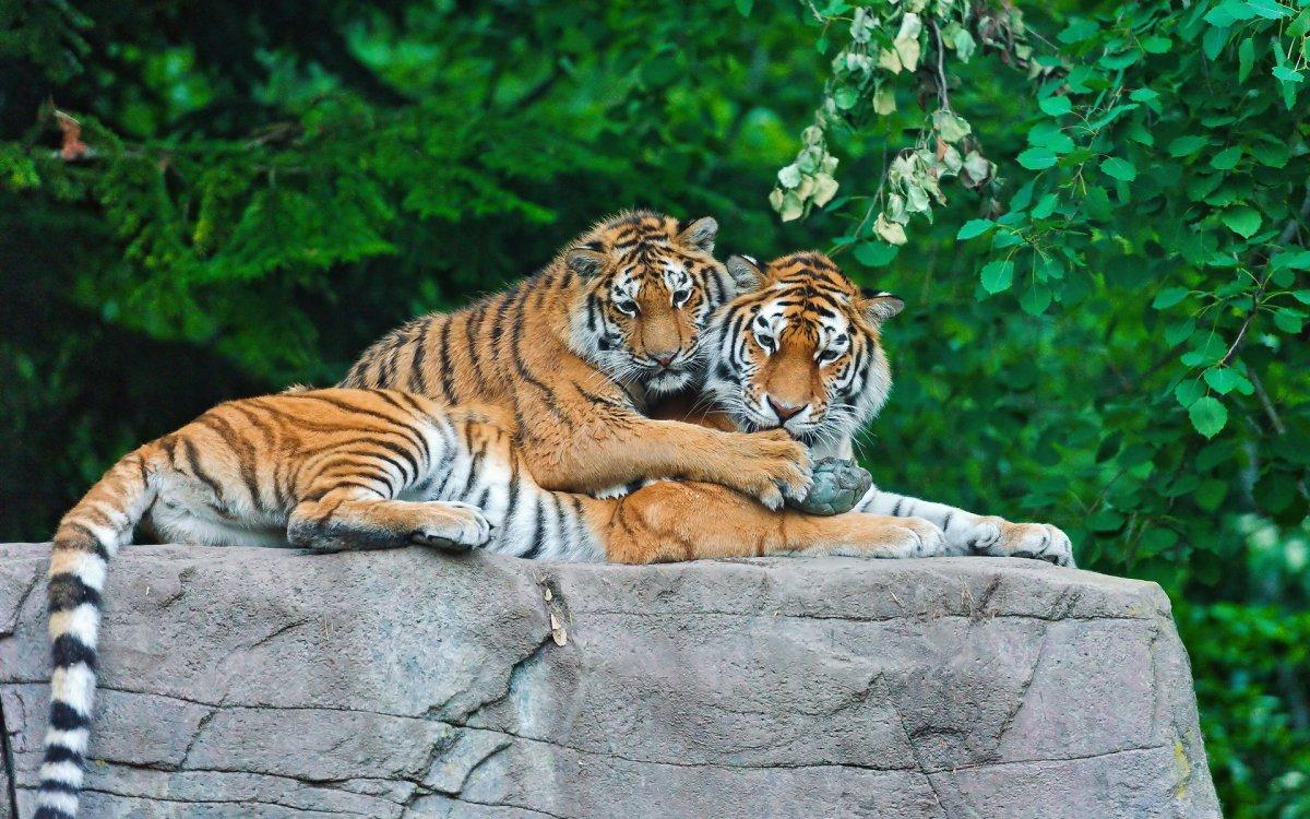 Cute-photos-of-wild-cats-06