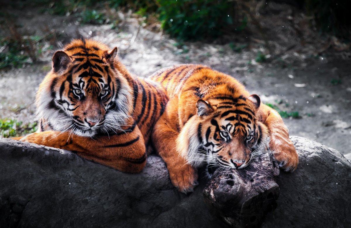 Cute-photos-of-wild-cats-07