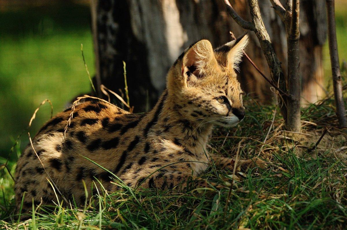 Cute-photos-of-wild-cats-08
