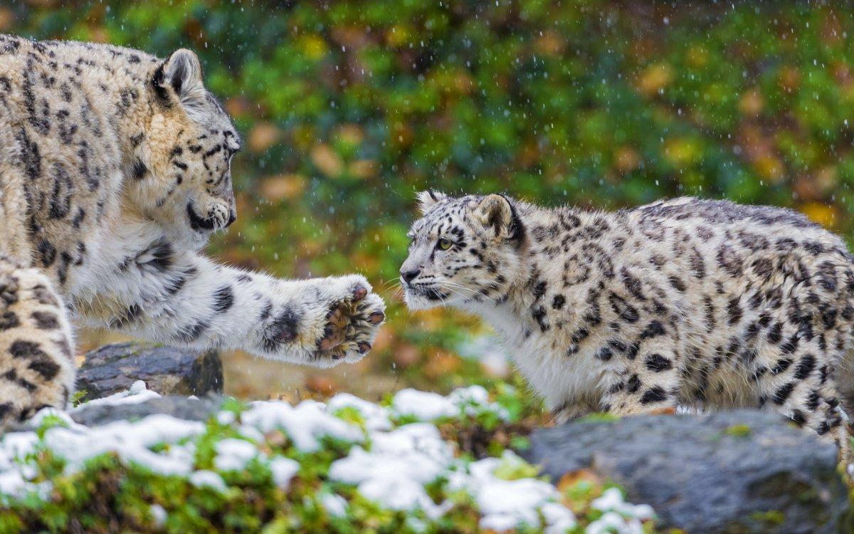 Cute-photos-of-wild-cats-10