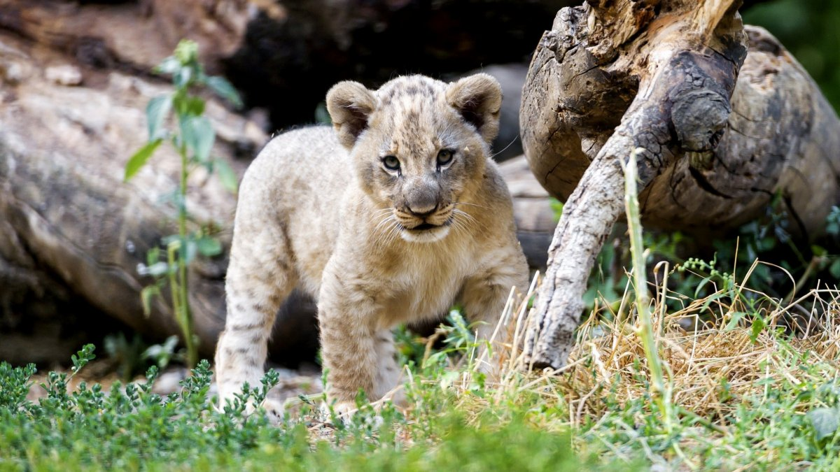 Cute-photos-of-wild-cats-11