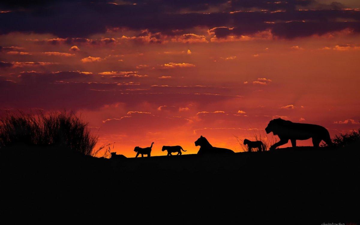 Cute-photos-of-wild-cats-12
