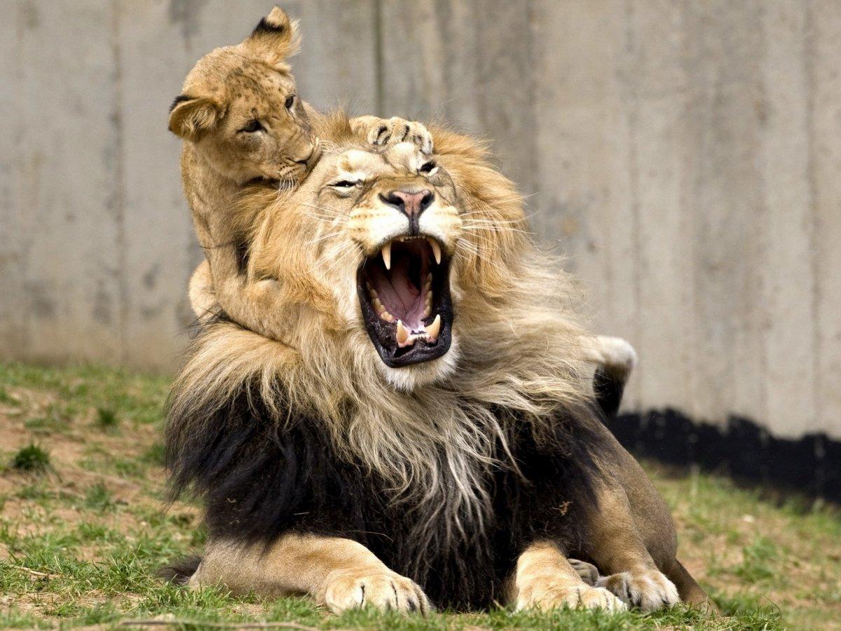 Cute-photos-of-wild-cats-13