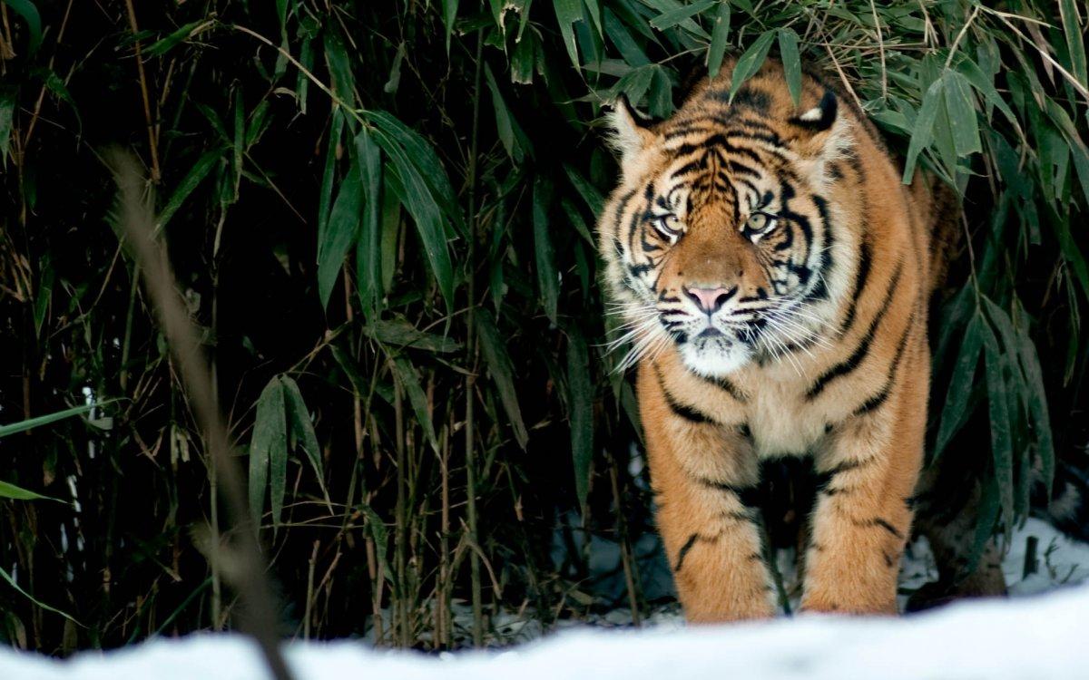 Cute-photos-of-wild-cats-14