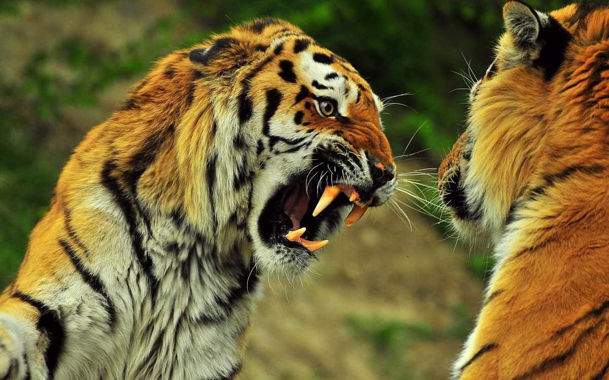 Cute-photos-of-wild-cats-15