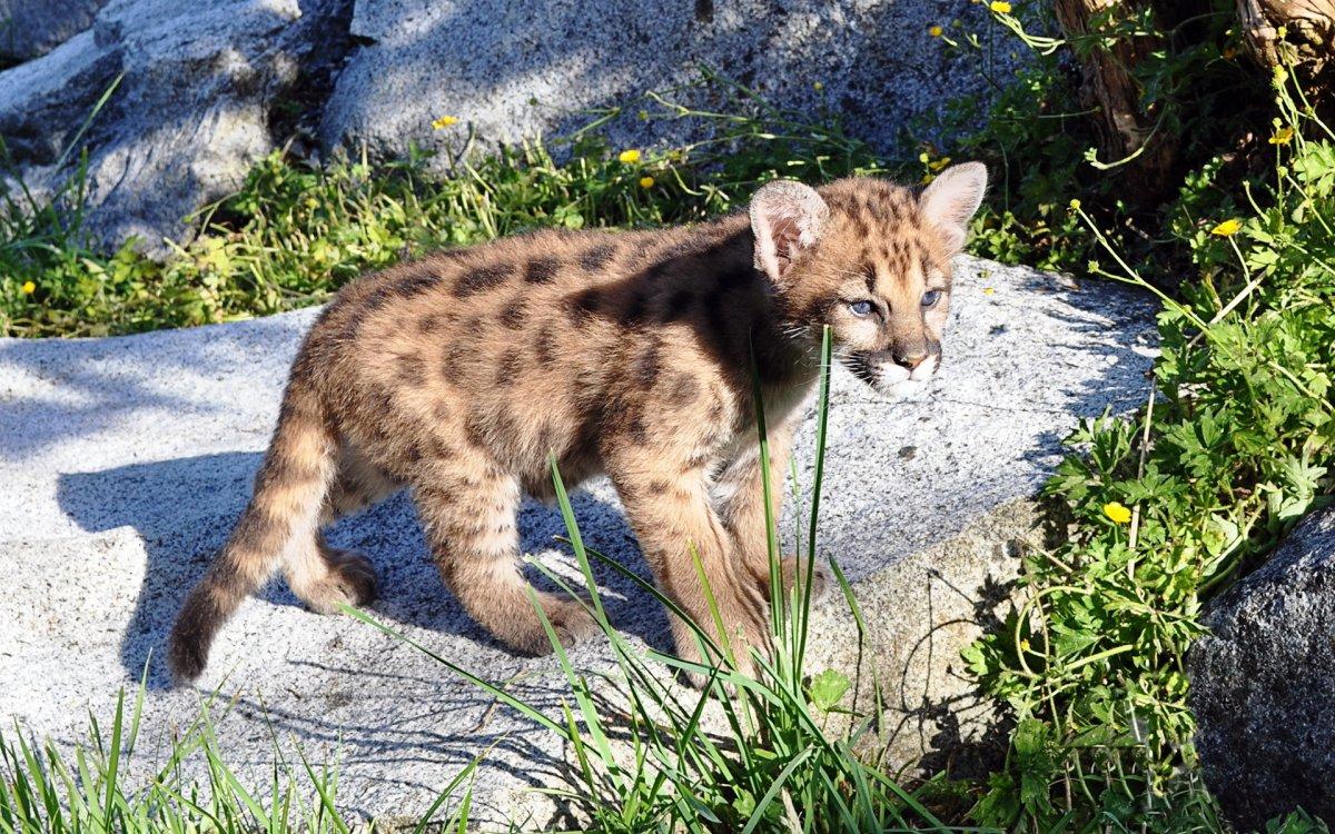 Cute-photos-of-wild-cats-16