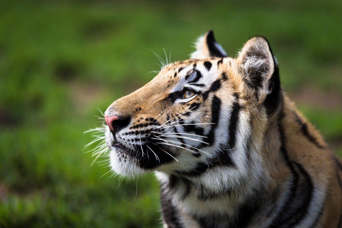 Cute-photos-of-wild-cats-18
