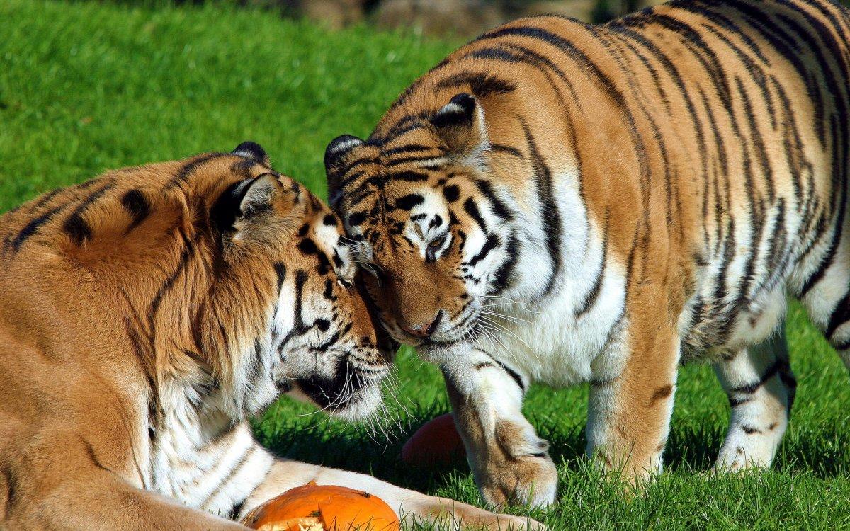 Cute-photos-of-wild-cats-20