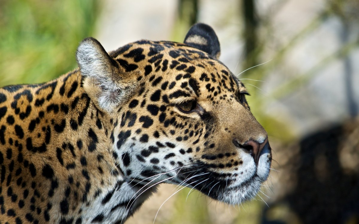 Cute-photos-of-wild-cats-21