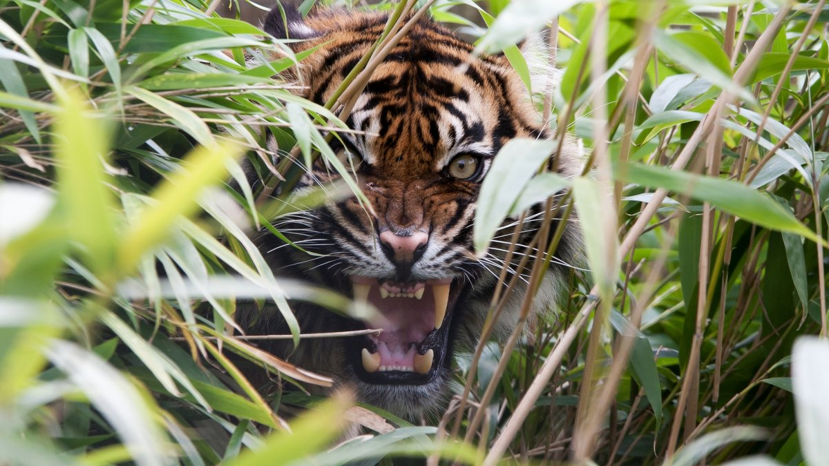 Cute-photos-of-wild-cats-22