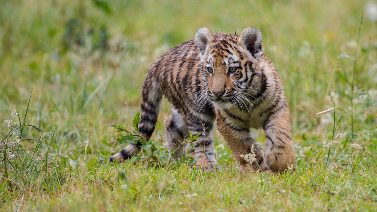 Cute-photos-of-wild-cats-24