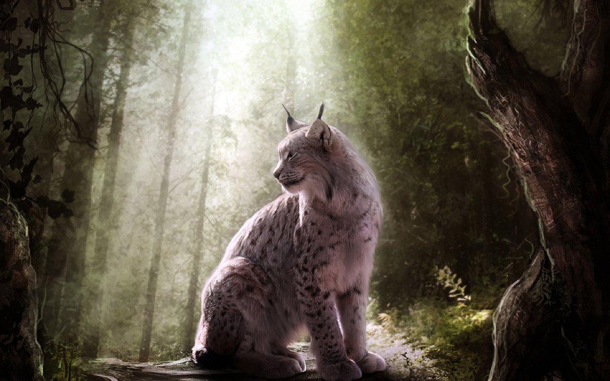 Cute-photos-of-wild-cats-25