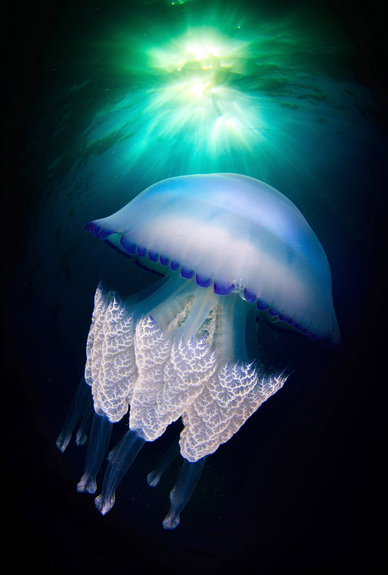 Detailed-look-at-the-jellyfish-06