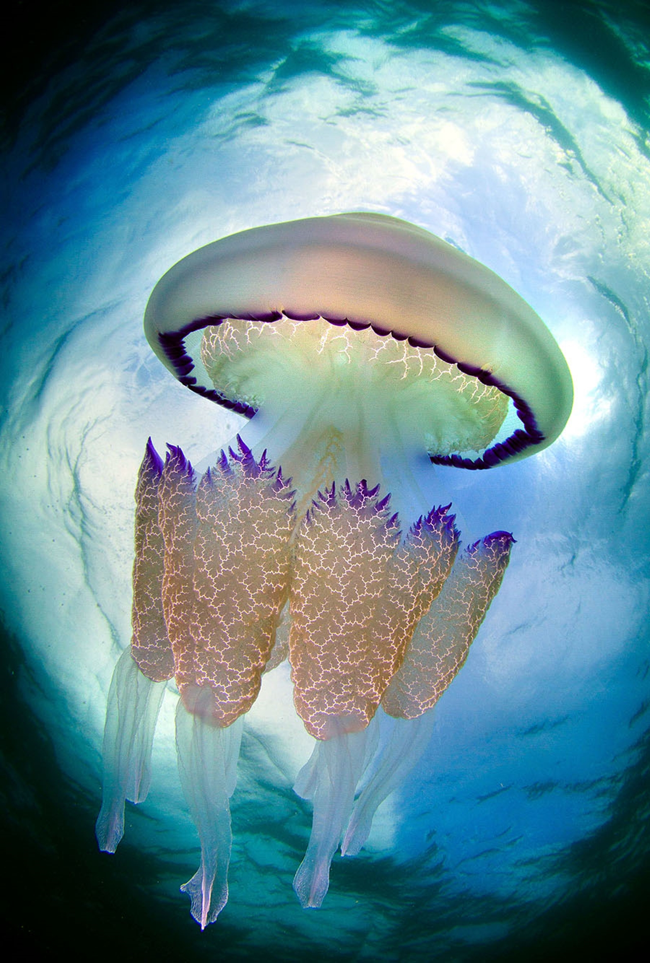 Detailed-look-at-the-jellyfish-10