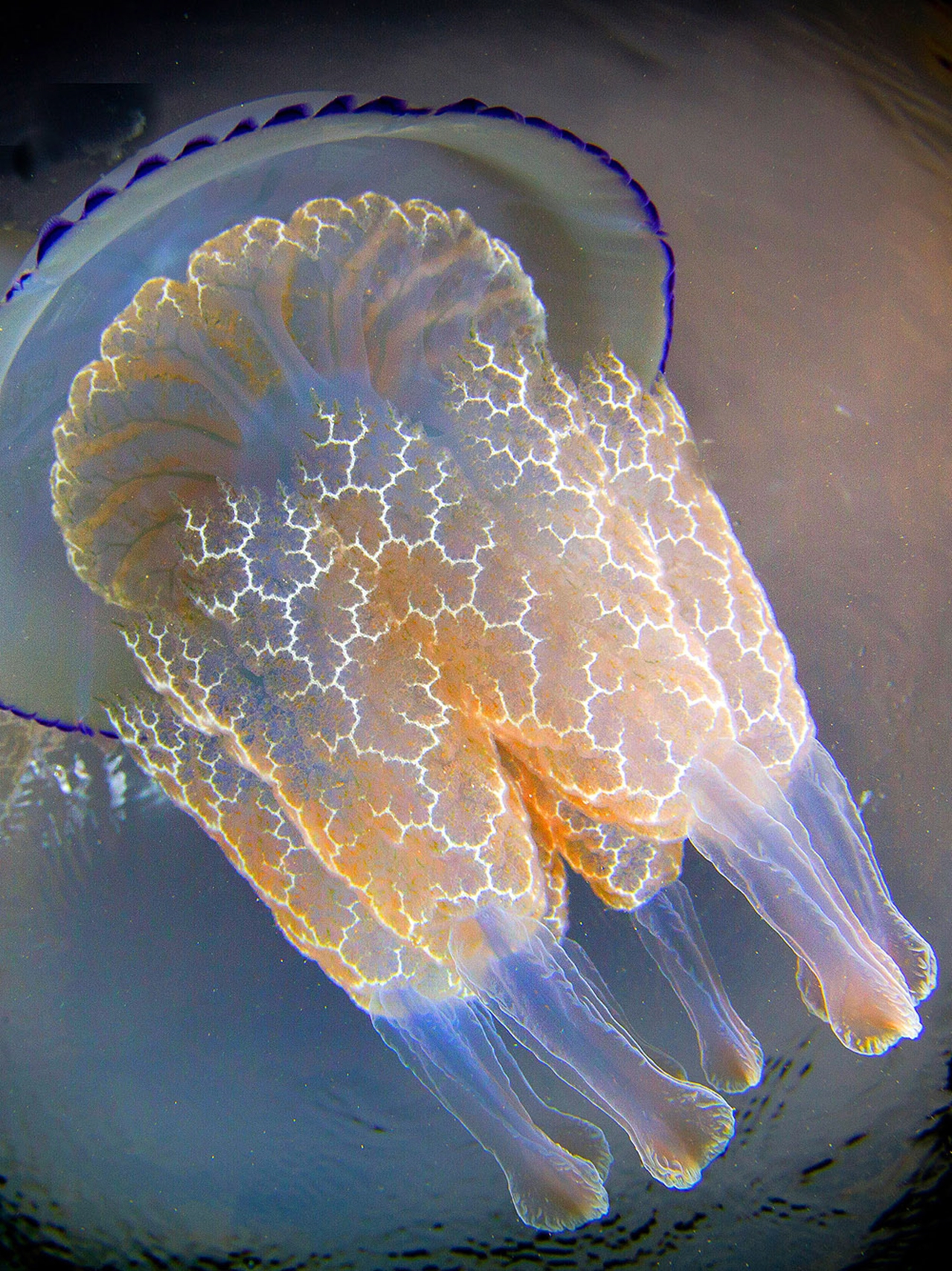 Detailed-look-at-the-jellyfish-11