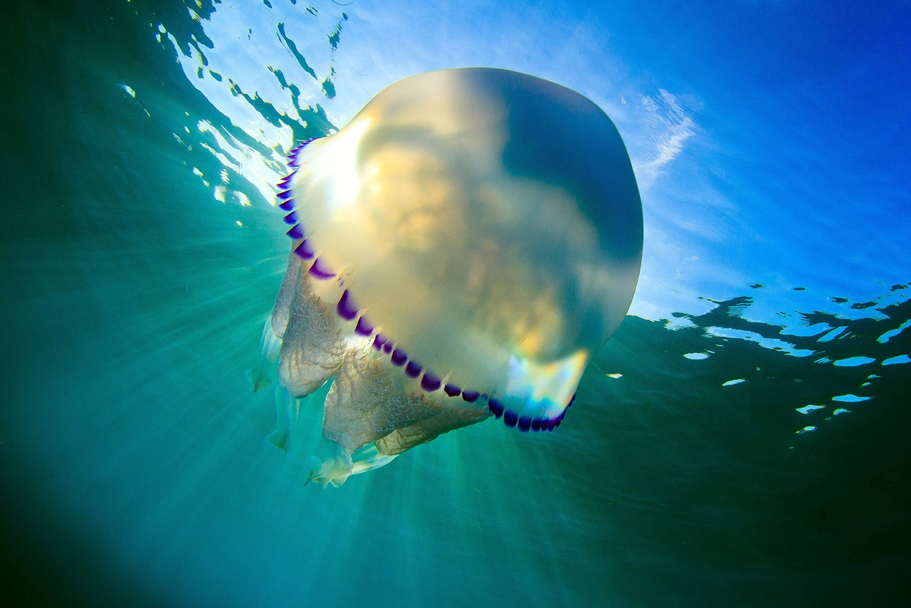 Detailed-look-at-the-jellyfish-15